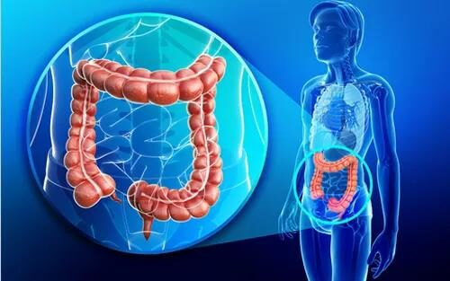 Lack of this key immune cell may lead to the occurrence of colorectal cancer