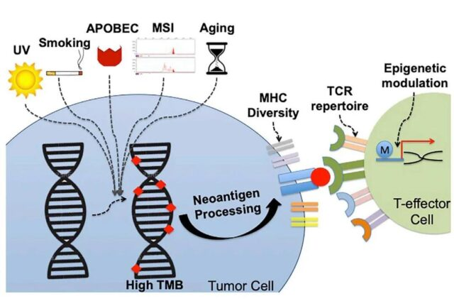 The challenge of tumor mutation burden as a biomarker for immunotherapy