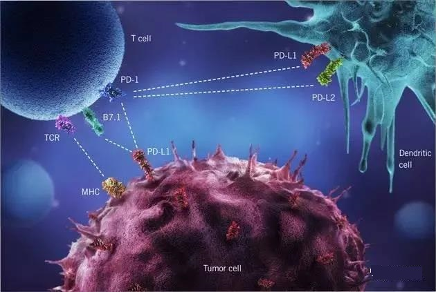 Tumor microenvironment and drug resistance in immunotherapy.