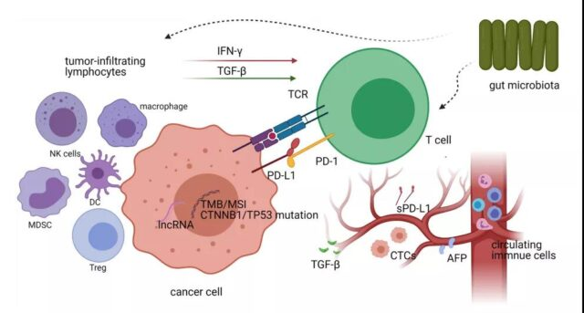 Biomarkers and future prospects of immunotherapy for hepatocellular carcinoma